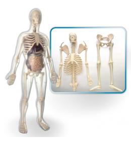 edukativna igračka anatomija muškarca