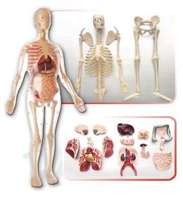 edukativna igračka anatomija žene